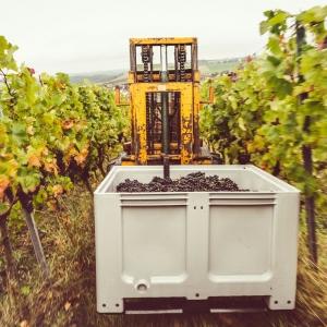 Weingut Franziska Schömig
