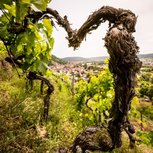Weingut Rudolf Fürst
